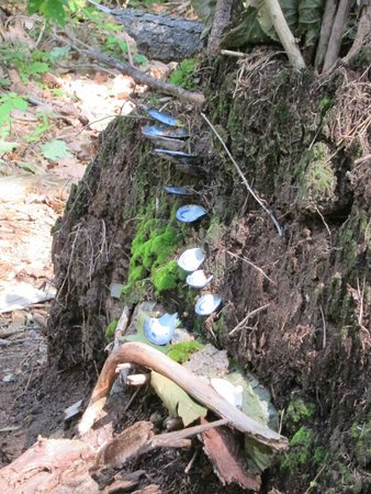 Mackworth Island: fairy home