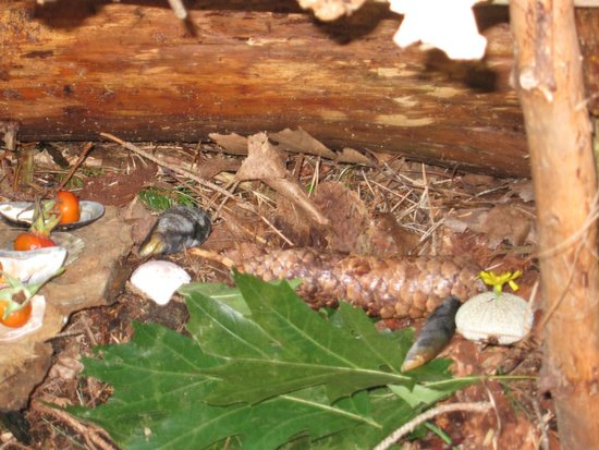 Mackworth Island: inside a fairy house
