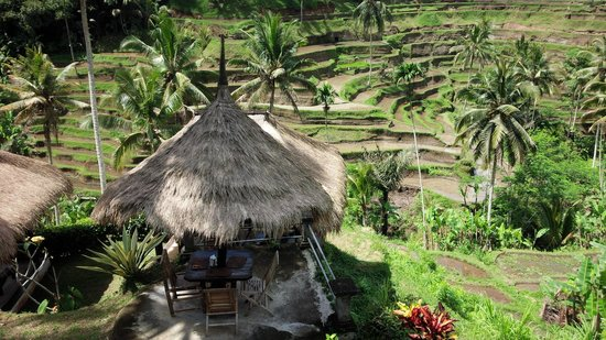 Tegalalang Rice Terrace: Alon Alon Terrace Cafe