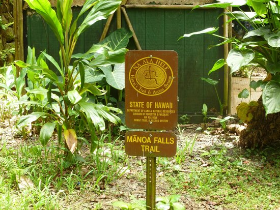 Manoa Falls: The beginning of the trail