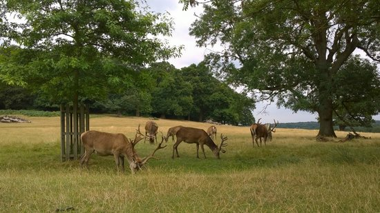 Richmond Park: It is not unusual to get quite close to deer like these. Do be careful though!
