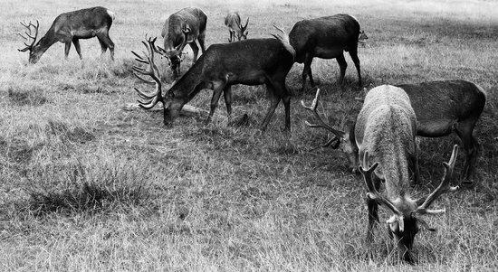 Richmond Park: Just beautiful to be near these wonderful beasts!