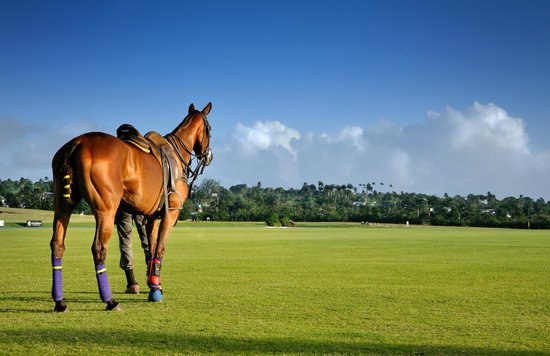 Saint James Parish, Barbados: Apes Hill Polo Club