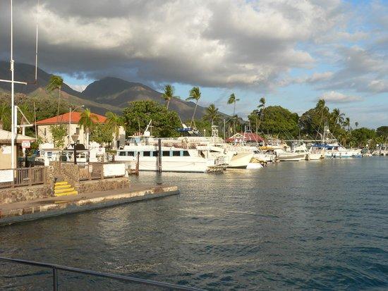 Lahaina Harbor : nice little harbor