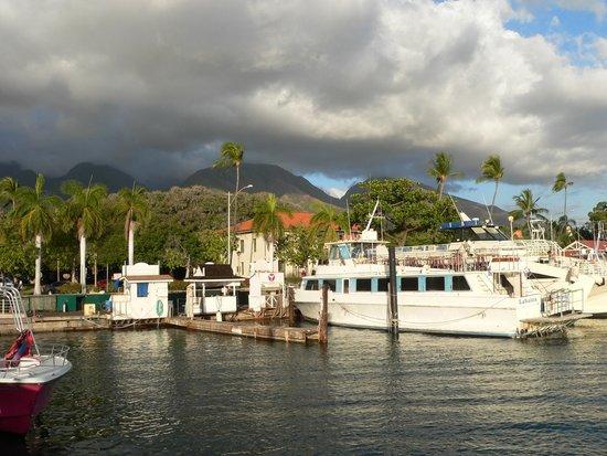 Lahaina Harbor: pretty as well