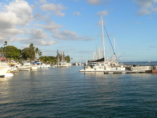 Lahaina Harbor: nice excursions available