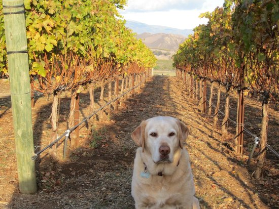 Santa Barbara Wine Country Cycling Tours - Day Tours: Almost Harvest Season