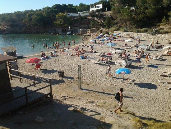 Fiesta Hotel Tanit : Beach at cala gracio