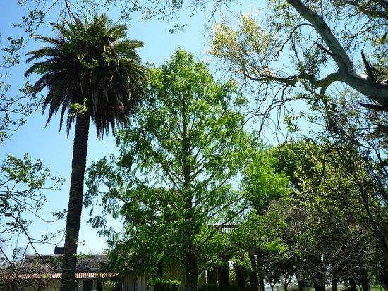 Estancia El Ombu de Areco: The Trees