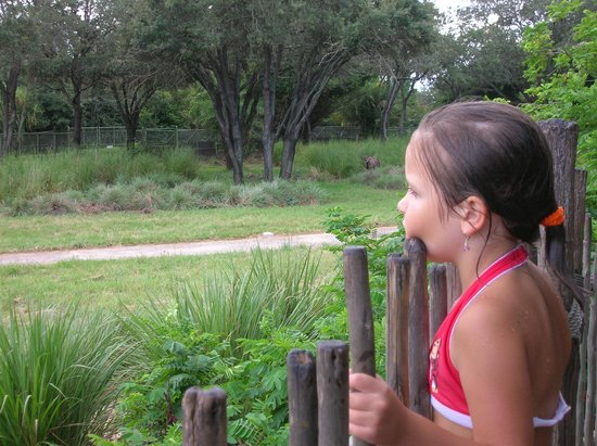 Disney's Animal Kingdom Lodge : View from hot tub