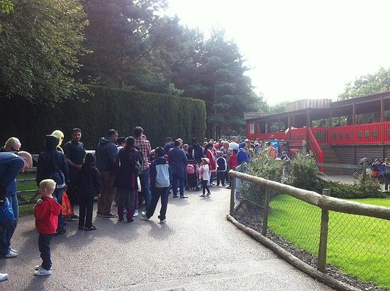 Drayton Manor Park: Queue for the Buffalo Roller Coaster - 20 August 2014