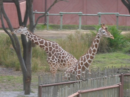 Disney's Animal Kingdom Lodge : view from room
