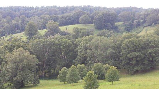 Biltmore Estate : beautiful landscape