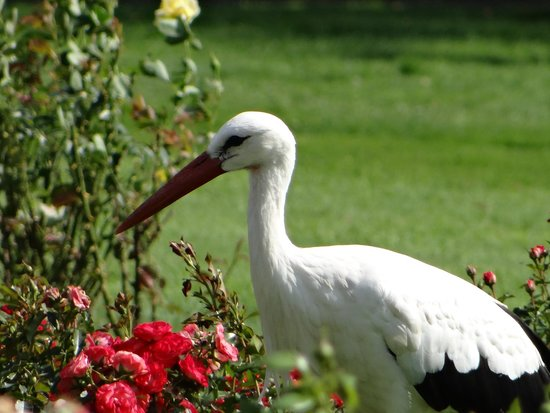 Weltvogelpark Walsrode: Stork walking about on the lawns