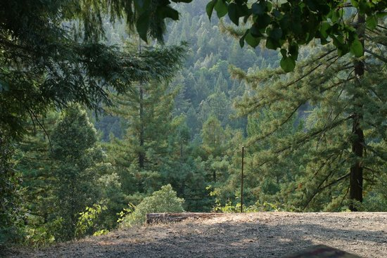 Redwoods River Resort & Campground: Redwoods paradise.