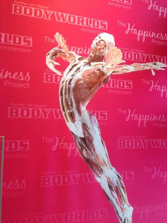 Body Worlds: Promotional Poster