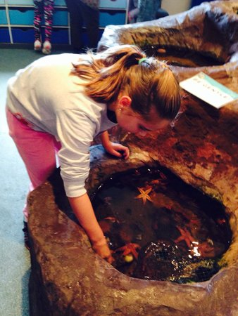 Macduff Marine Aquarium: Expiring the touch pool