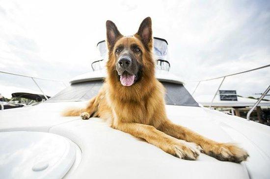 Marina Shores Marina: Pet friendly marina with multiple pet stations and dog treats in the admin office.