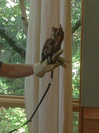 Ruffner Mountain Nature Preserve: Beautiful little owl