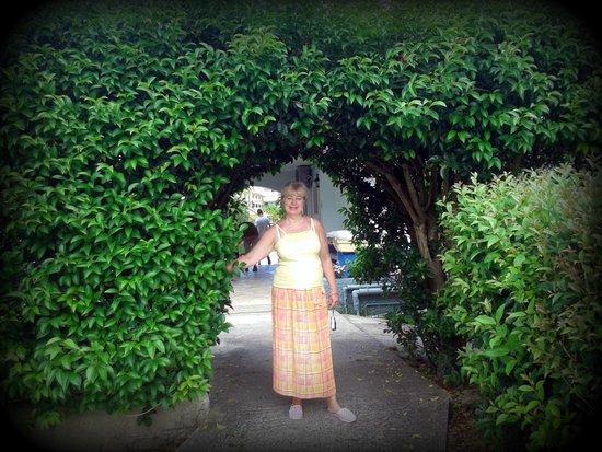 Acharavi Beach Hotel: hotel garden