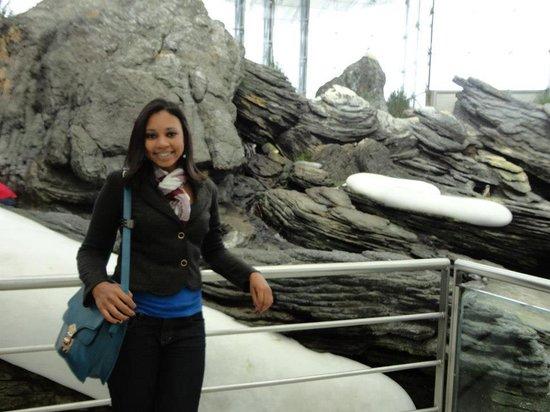 Lisbon Oceanarium: oceanário de lisboa