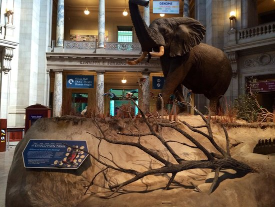 National Museum of Natural History : Entrance