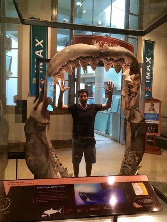 Museo Nacional Smithsonian de Historia Natural: Jaws