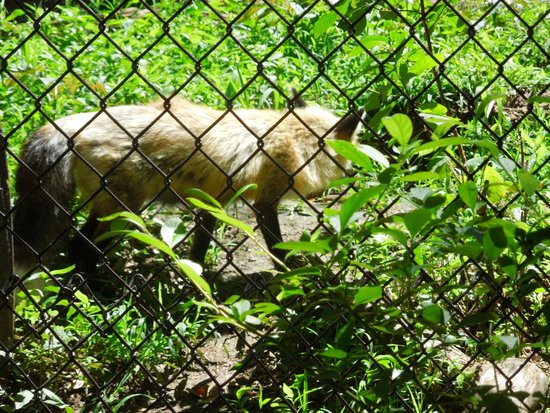 Western North Carolina Nature Center Asheville Zoo