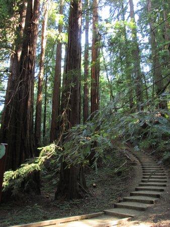 Extranomical Tours : Enchanting Muir Woods