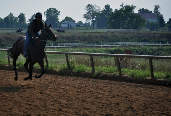 The Thoroughbred Center: Training a racehorse