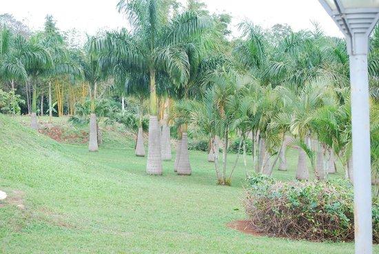 Panoramic Grand: parque