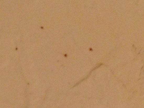Super 8 Wisconsin Dells: Red Bugs in the Shower