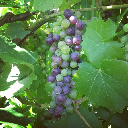 Farm to Glass Tours: Beautiful time to be in the vineyard