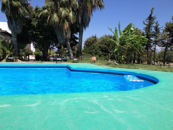 Rhodian Sun Hotel : Busy at the pool today!