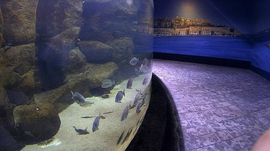 Malta National Aquarium: With Valetta on background wall painting...