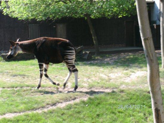 Antwerp Zoo (Dierentuin): dit beestje ken ik niet
