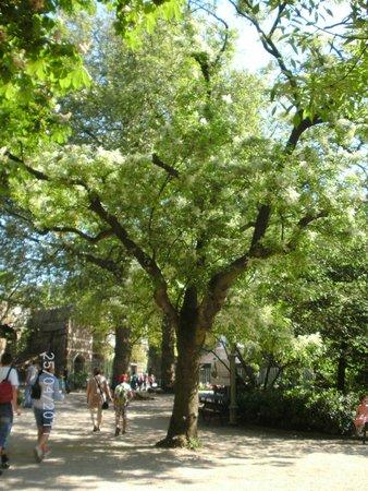 Antwerp Zoo (Dierentuin): eerste groen