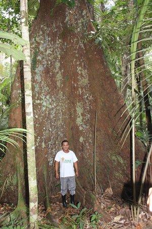 Juma Amazon Lodge: Caminhada na selva