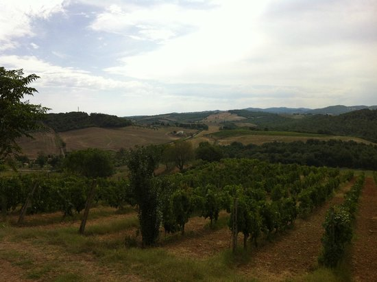 Agriturismo Marruchetone Vecchio: Panorama