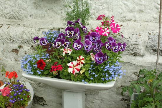 Wyvis Boutique Bed & Breakfast: Garden Corner - Recycled Basin with flowers