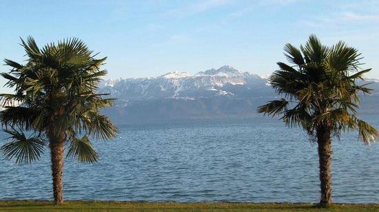 Lac Léman (Lac de Genève) : palm trees?
