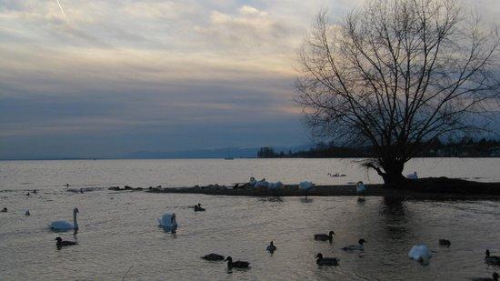 Lac Léman (Lac de Genève) : lovely
