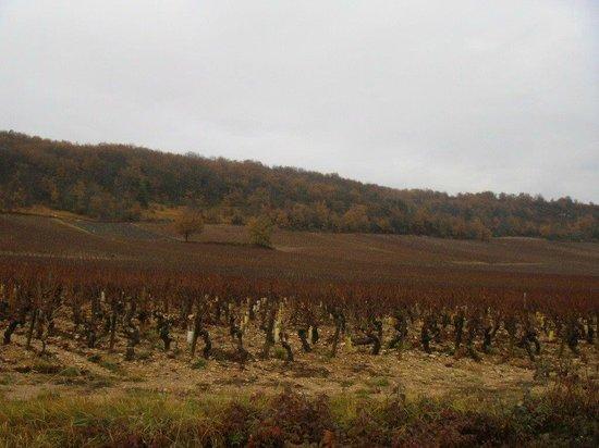 Chateau de Rully : Vue des vignes de Rully