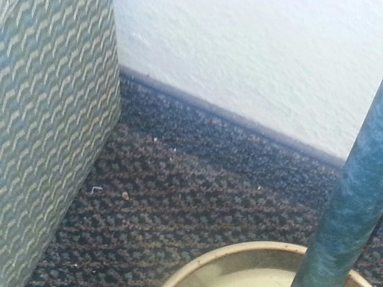 Days Inn And Suites Corpus Christi Central : Food on the floor when we walked in . Clearly they didn't clean the carpet