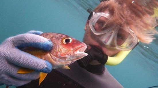 Top Shot Spearfishing: gotcha!