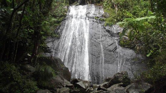 The St. Regis Bahia Beach Resort, Puerto Rico: El Yunque Rainforest
