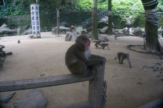 Takasakiyama Natural Zoo: 写真撮影には慣れているようです