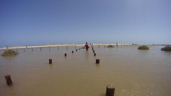 Occidental Jandia Mar : Plage