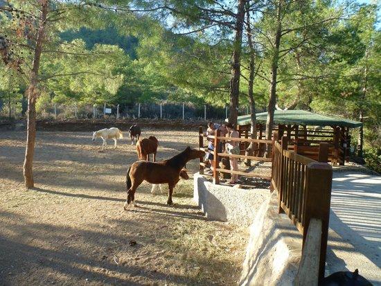Amara Dolce Vita Luxury: Зоопарк