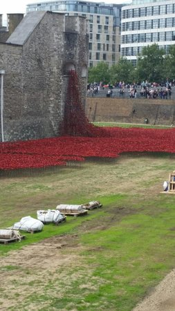 Buckingham Palace: The Amazing sight of the sea of red Poppies around the Tower of London